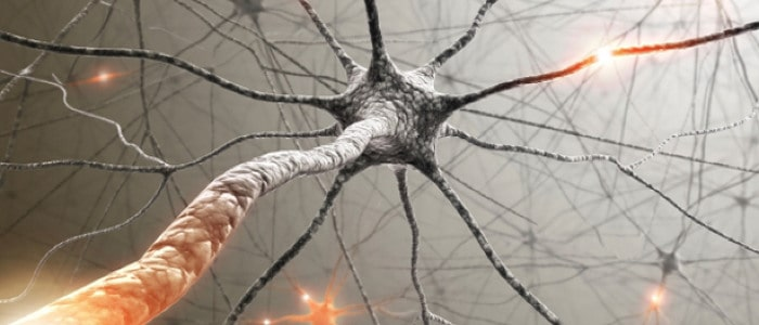 Modafinil targeting selective neurons in the brain